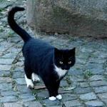 Eine unserer Katzen