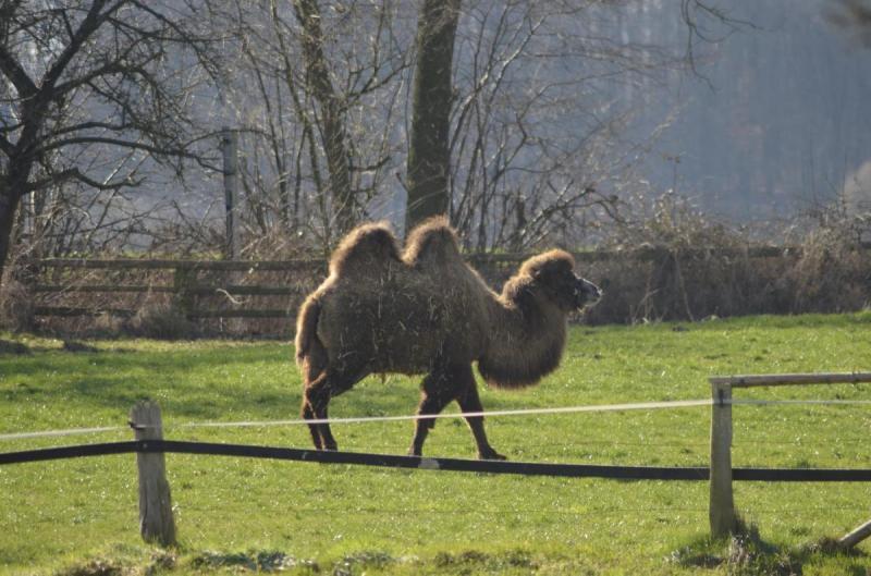 Kamelreiten in den Baumbergen