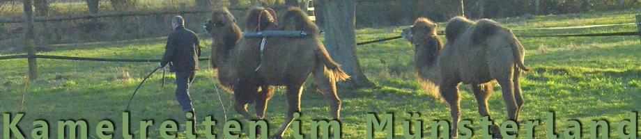 Kamelreiten im Muensterland